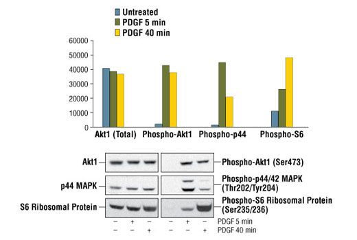 Image 2: PathScan® Cell Growth 4-Plex Array Kit