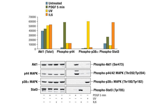 Image 2: PathScan® Inflammation 4-Plex Array Kit