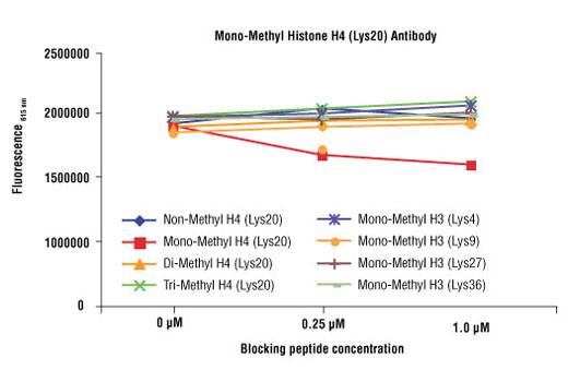 Mono-Methyl-Histone H4 (Lys20) Antibody specificity was determined by peptide ELISA. The graph depicts the binding of the antibody to pre-coated mono-methyl histone H4 (Lys20) peptide in the presence of increasing concentrations of various competitor peptides. As shown, only the mono-methyl histone H4 (Lys20) peptide competed for binding of the antibody.