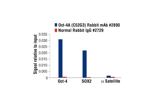Chromatin immunoprecipitations were performed with cross-linked chromatin from NCCIT cells and either Oct-4A (C52G3) Rabbit mAb or Normal Rabbit IgG #2729 using SimpleChIP<sup>®</sup> Enzymatic Chromatin IP Kit (Magnetic Beads) #9003. The enriched DNA was quantified by real-time PCR using SimpleChIP<sup>®</sup> Human Oct-4 Promoter Primers #4641, SimpleChIP<sup>®</sup> Human Sox2 Promoter Primers #4649, and SimpleChIP<sup>®</sup> Human α Satellite Repeat Primers #4486. The amount of immunoprecipitated DNA in each sample is represented as signal relative to the total amount of input chromatin, which is equivalent to one.