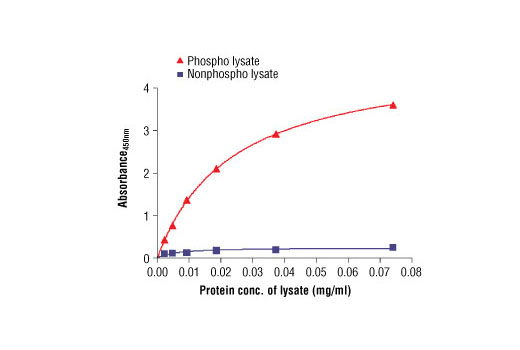 Figure 2: The relationship between protein concentration of phospho or nonphospho lysates and the absorbance at 450 nm is shown. Unstarved HCC827 cells were cultured (85% confluence) and lysed with or without addition of phosphatase inhibitor to the lysis buffer (phospho or nonphospho lysate).