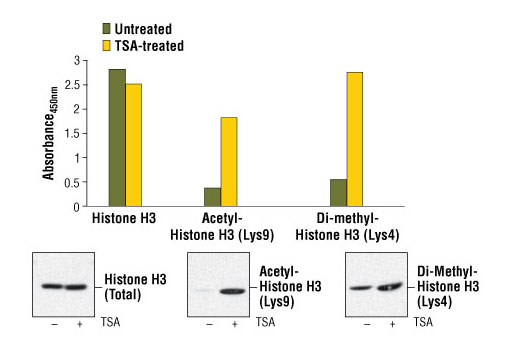 Figure 1. Treatment of NIH/3T3 cells with trichostatin A (TSA) increases the acetylation of histone H3 at Lys9, detected by PathScan<sup>®</sup> Acetyl-Histone H3 (Lys9) Sandwich ELISA Kit #7121, and the di-methylation of histone H3 at Lys4, detected by PathScan<sup>®</sup> Di-Methyl-Histone H3 (Lys4) Sandwich ELISA Kit #7124. However, TSA treatment does not affect the level of total histone H3 that is detected by Pathscan<sup>®</sup> Total Histone H3 Sandwich ELISA Kit #7253. NIH/3T3 cells (70-80% confluent) were treated for 16-18 hours with 0.4 μM TSA at 37ºC. Absorbance readings at 450 nm are shown in the top figure while the corresponding Western blots using Histone H3 Antibody #9715 (left panel), Acetyl-Histone H3 (Lys9) Antibody #9671 (middle panel) or Di-Methyl-Histone H3 (Lys4) (C64G9) Rabbit mAb #9725 (right panel) are shown in the bottom figure.