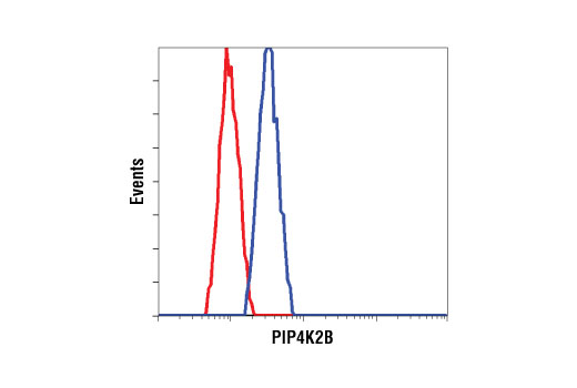 Flow cytometric analysis of HeLa cells using PIP4K2B Antibody (blue) compared to a nonspecific negative control antibody (red).
