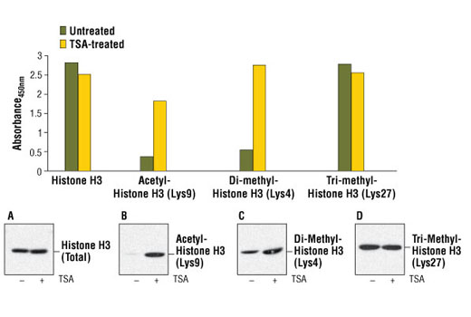 Figure 1. Treatment of NIH/3T3 cells with trichostatin A (TSA) increases the acetylation of Histone H3 at Lys 9, detected by PathScan<sup>®</sup> Acetyl-Histone H3 (Lys9) Sandwich ELISA Kit #7121, and the di-methylation of Histone H3 at Lys4, detected by PathScan<sup>®</sup> Di-Methyl-Histone H3 (Lys4) Sandwich ELISA Kit #7124. However, TSA treatment does not affect the level of tri-methylation at Lys27, detected by PathScan<sup>®</sup> Tri-Methyl-Histone H3 (Lys27) Sandwich ELISA Kit #7866, or the level of total Histone H3, detected by Pathscan<sup>®</sup> Total Histone H3 Sandwich ELISA Kit #7253. NIH/3T3 cells (70-80% confluent) were treated for 16-18 hours with 0.4 μM TSA at 37ºC. Absorbance readings at 450 nm are shown in the top figure while the corresponding Western blots using Histone H3 Antibody #9715 (panel A), Acetyl-Histone H3 (Lys9) Antibody #9671 (panel B), Di-Methyl-Histone H3 (Lys4) (C64G9) Rabbit mAb #9725 (panel C) or Tri-Methyl-Histone H3 (Lys27) Antibody #9756 (panel D) are shown in the bottom figure.