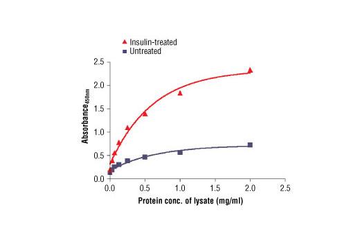 ELISA Kit Negative Regulation of Kinase Activity - count 20