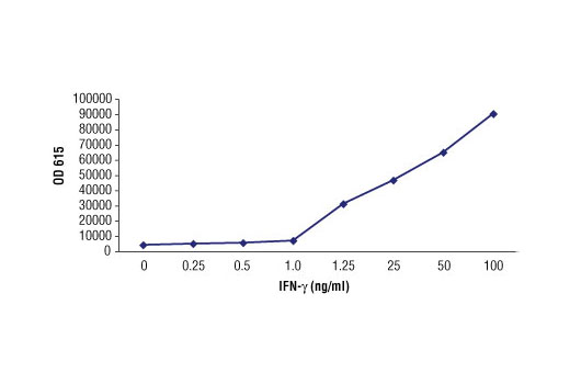 ELISA analysis of plates coated with recombinant human IFN-γ using IFN-γ (3F1E3) Mouse mAb.