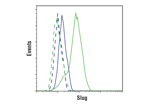 Flow cytometric analysis of PANC-1 cells (blue) and A204 cells (green) using Slug (C19G7) Rabbit mAb (solid lines) or a concentration-matched Rabbit (DA1E) mAb IgG XP<sup>®</sup> Isotype Control #3900 (dashed lines). Anti-rabbit IgG (H+L), F(ab')<sub>2</sub> Fragment (Alexa Fluor<sup>®</sup> 488 Conjugate) #4412 was used as a secondary antibody.