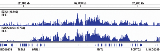Methyl-Histone H3 (Lys27) Antibody Sampler Kit, UniProt ID P68431, Entrez ID 8350 #53312