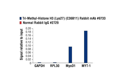 Chromatin IP - Tri-Methyl-Histone H3 (Lys27) (C36B11) Rabbit mAb
