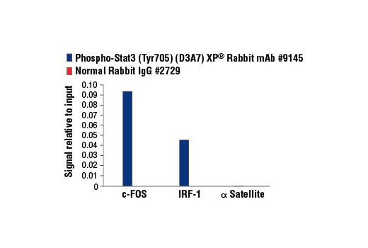Chromatin immunoprecipitations were performed with cross-linked chromatin from Hep G2 cells starved overnight and treated with IL-6 (100 ng/ml) for 30 minutes, and either Phospho-Stat3 (Tyr705) (D3A7) XP<sup>®</sup> Rabbit mAb or of Normal Rabbit IgG #2729 using SimpleChIP<sup>®</sup> Enzymatic Chromatin IP Kit (Magnetic Beads) #9003. The enriched DNA was quantified by real-time PCR using human IRF-1 promoter primers, SimpleChIP<sup>®</sup> Human c-Fos Promoter Primers #4663, and SimpleChIP<sup>®</sup> Human α Satellite Repeat Primers #4486. The amount of immunoprecipitated DNA in each sample is represented as signal relative to the total amount of input chromatin, which is equivalent to one.