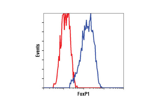 Flow cytometric analysis of MCF7 cells using FoxP1 Antibody (blue) compared to a nonspecific negative control antibody (red).