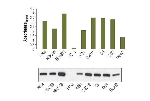 ELISA Kit Negative Regulation of Myelination