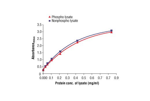 Figure 2: The relationship between protein concentration of phospho or nonphospho lysates and the absorbance at 450 nm is shown. Unstarved Calu-3 cells were cultured (85% confluence) and lysed with or without the addition of phosphatase inhibitor to the lysis buffer (phospho or nonphospho lysate).