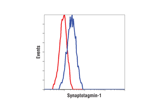 Flow cytometric analysis of C2C12 cells using Synaptotagmin-1 Antibody (blue) compared to a nonspecific negative control antibody (red).