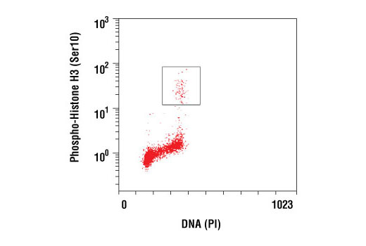 Monoclonal Antibody - Phospho-Histone H3 (Ser10) (D2C8) XP® Rabbit mAb, UniProt ID P68431, Entrez ID 8350 #3377, Chromatin Regulation / Acetylation