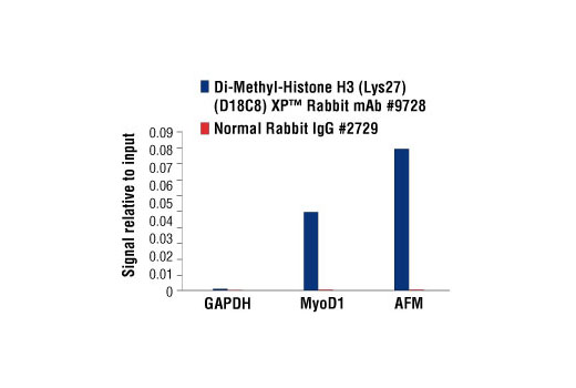 Chromatin immunoprecipitations were performed with cross-linked chromatin from HeLa cells and either Di-Methyl-Histone H3 (Lys27) (D18C8) XP<sup>®</sup> Rabbit mAb or Normal Rabbit IgG #2729 using SimpleChIP<sup>®</sup> Enzymatic Chromatin IP Kit (Magnetic Beads) #9003. The enriched DNA was quantified by real-time PCR, using SimpleChIP<sup>®</sup> Human GAPDH Exon 1 Primers #5516, SimpleChIP<sup>®</sup> Human MyoD1 Exon 1 Primers #4490, and SimpleChIP<sup>®</sup> Human AFM Intron 1 Primers #5098. The amount of immunoprecipitated DNA in each sample is represented as signal relative to the total amount of input chromatin, which is equivalent to one.