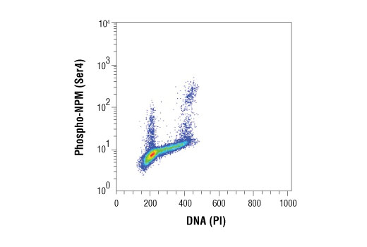 Flow cytometric analysis of Jurkat cells using Phospho-NPM (Ser4) (D19C1) XP® Rabbit mAb compared to Propidium Iodide (PI)/RNase Staining Solution #4087. Anti-rabbit IgG (H+L), F(ab')2 Fragment (Alexa Fluor® 488 Conjugate) #4412 was used as a secondary antibody.