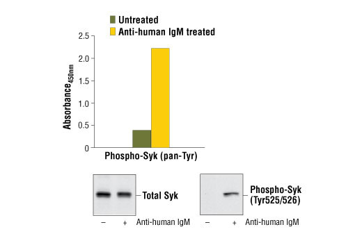 PathScan® Phospho-Syk (panTyr) Sandwich ELISA Kit - ELISA - 1 Kit #7928 - Immunology and Inflammation