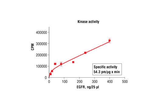 Kinase Assay - Radiometric