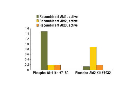 Figure 2: Demonstration of phospho-Akt protein sandwich ELISA kit specificity using recombinant phosphorylated Akt1, Akt2 and Akt3 proteins. Phospho-Akt1 (Ser473) is detected by #7160 while #7932 measures levels of phospho-Akt2 (Ser474). Recombinant phosphorylated Akt protein (1.0 ng per microwell) is assayed using both ELISA kits.