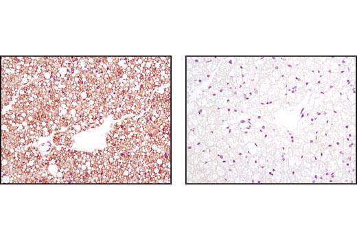 Polyclonal Antibody Immunohistochemistry Paraffin Lipid Binding
