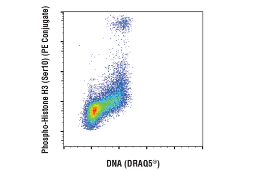 Flow cytometric analysis of Jurkat cells using Phospho-Histone H3 (Ser10) (D7N8E) XP® Rabbit mAb (PE Conjugate) #29237 versus DRAQ5® (DNA content).