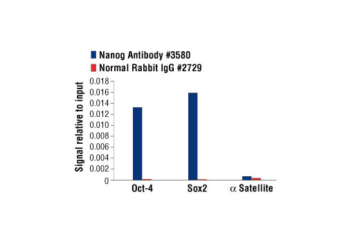 Chromatin immunoprecipitations were performed with cross-linked chromatin from NCCIT cells and either Nanog Antibody or Normal Rabbit IgG #2729 using SimpleChIP<sup>®</sup> Enzymatic Chromatin IP Kit (Magnetic Beads) #9003. The enriched DNA was quantified by real-time PCR using SimpleChIP<sup>®</sup> Human Oct-4 Promoter Primers #4641, SimpleChIP<sup>®</sup> Human Sox2 Promoter Primers #4649, and SimpleChIP<sup>®</sup> Human α Satellite Repeat Primers #4486. The amount of immunoprecipitated DNA in each sample is represented as signal relative to the total amount of input chromatin, which is equivalent to one.