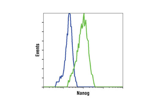Flow cytometric analysis of HeLa cells (blue) and NTERA2 cells (green) using Nanog Antibody.