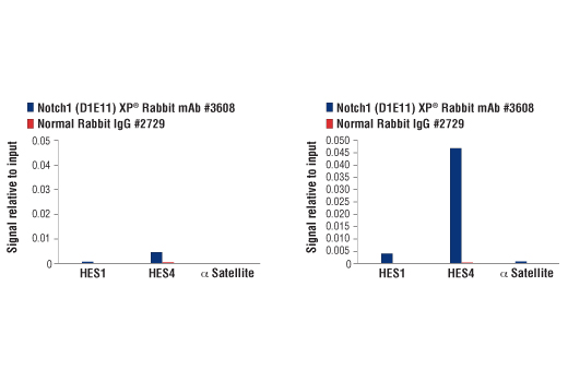 Image 3: Notch Isoform Antibody Sampler Kit