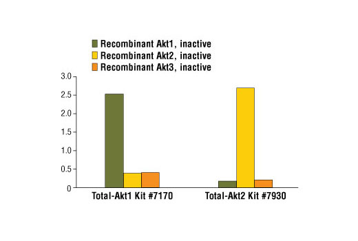 Figure 2: Demonstration of total protein sandwich ELISA kit specificity using recombinant Akt1, Akt2 and Akt3 proteins. Total Akt1 is detected by #7170 while #7930 measures endogenous levels of Akt2. Recombinant, inactive Akt protein (1.0 ng per microwell) is assayed using both ELISA kits.