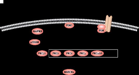 Gpcr  Calcium  Camp Signaling Resources