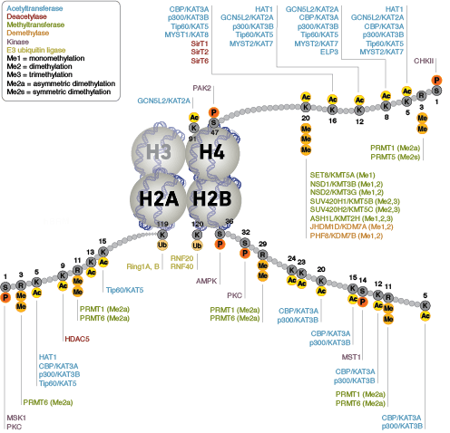 Epigenetic Writers and Erasers of Histone H2A, H2B, and H4