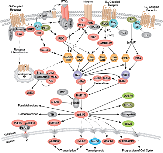 PI3K/AKT/MAPK Signaling | Cell Signaling Technology on cyclic adenosine monophosphate, mapk/erk pathway, apoptosis cascade, c-jun n-terminal kinases, jak-stat signaling pathway, protein kinase, adenylate cyclase, pi3k/akt/mtor pathway, protein kinase c, wnt signaling pathway, signal transduction, protein kinase cascade, tyrosine kinase, cyclin-dependent kinase, notch signaling pathway, amyloid cascade, signal transduction pathway cascade, receptor tyrosine kinase, tgf beta signaling pathway, caspase cascade,