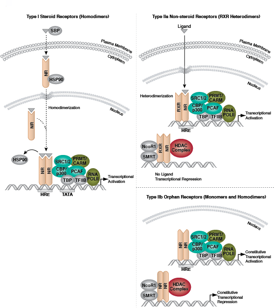Epigenetics   Cell Signaling Technology