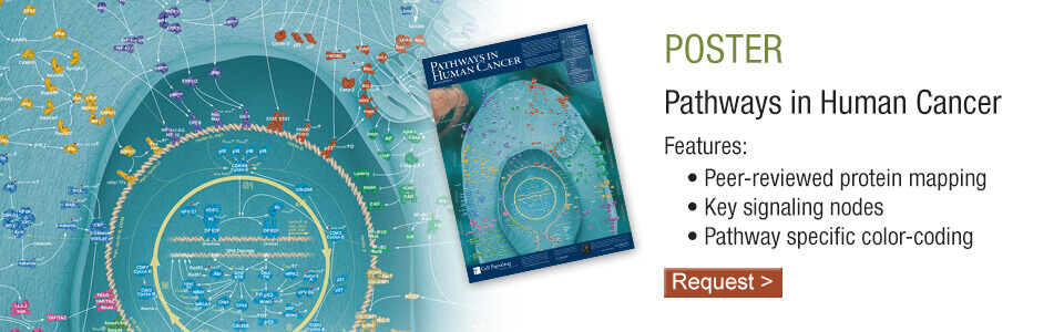Pathways in Human Cancer Poster