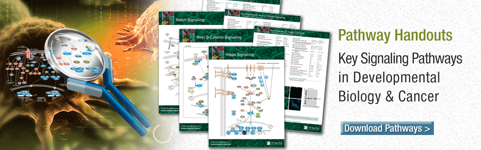 Key Signaling Pathways in Developmental Biology & Cancer