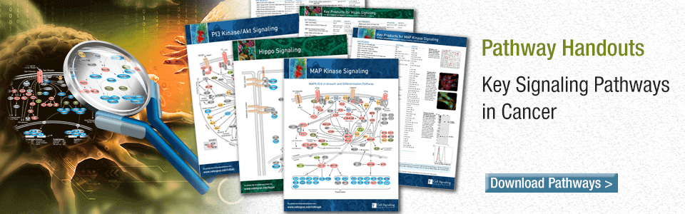 Key Signaling Pathways in Cancer