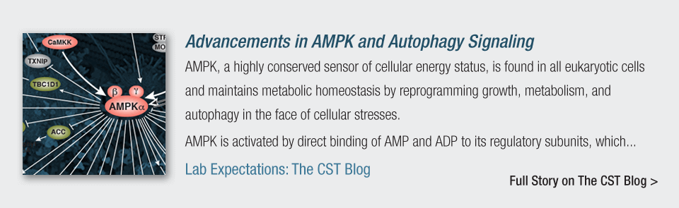 Advancements in AMPK and Autophagy Signaling