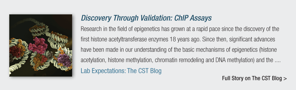 Discovery through Validation: ChIP assays