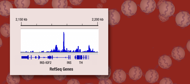 ChIP-seq Validated Antibodies