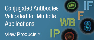 Conjugated Antibodies Validated for Multiple Applications