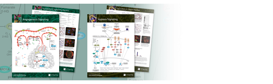 Deciphering Cancer: Pathway Handouts