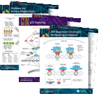 Genomic Instability Pathway Handouts