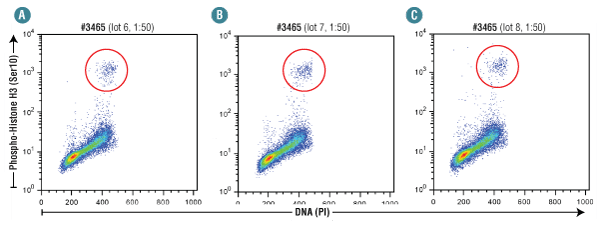 Flow cytometry analysis of Jurkat cells using multiple lots of Phospho-Histone H3 (Ser10) (D2C8) XP® Rabbit mAb (Alexa Fluor® 488 Conjugate) #3465