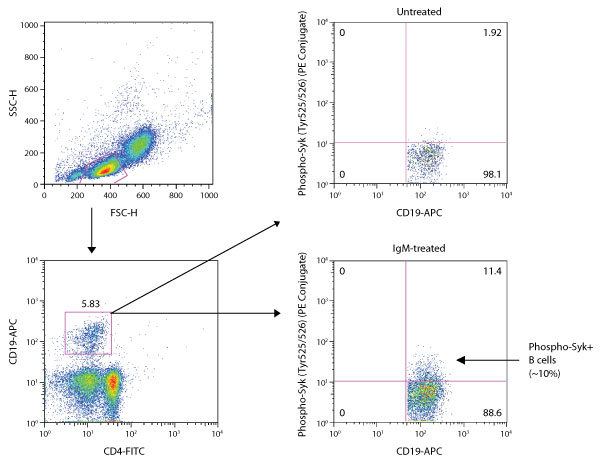 Intracellular Flow Cytometry