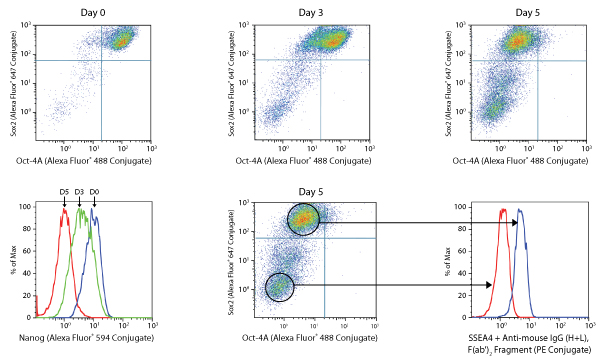 Intracellular Flow Cytometry Uses | Cell Signaling Technology