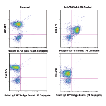 Flow cytometric analysis of human peripheral blood mononuclear cells