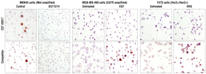Immunohistochemical analysis of paraffin-embedded MKN45 cells