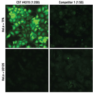 Side by side immunofluorescent comparison of XP® #4370 vs competitors