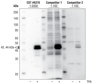 Side by side western blot analysis of XP® #4370 vs competitors